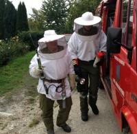 Unsere Aufgabe: Wespen bekämpfen
